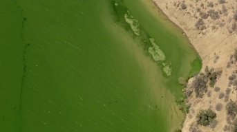 Toxic Green Bloom Keeps Swimmers Out of Pyramid Lake