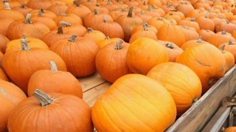 Irvine Park Railroad's Pumpkin Patch Soon to Sprout