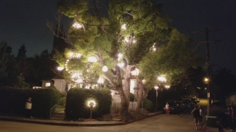 The LA You May Not Know: Chandelier Tree