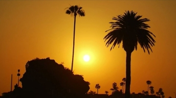 The LA You May Not Know: The Trees of LA