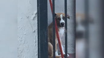Facebook Video of Dog Abuse Leads to Arrest