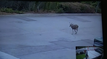 Man Pleads No Contest to Misdemeanor Count in Deer's Death