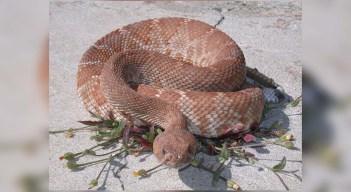 4 to Watch: Rattlesnake Season is Here