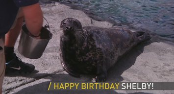 Senior Seal Celebrates Birthday
