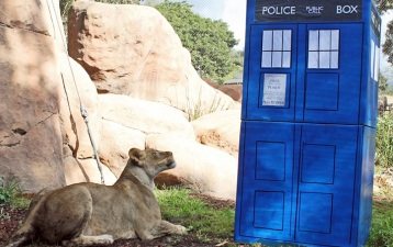 Doctor Who and the Big Cats