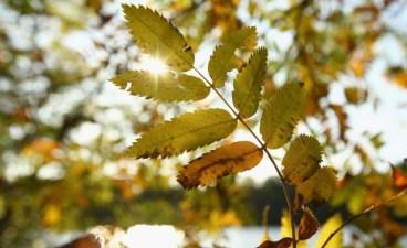 New Leaf-Tracking Map: California Fall Foliage Blog