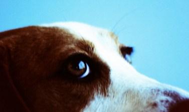 Beaglefest 2012
