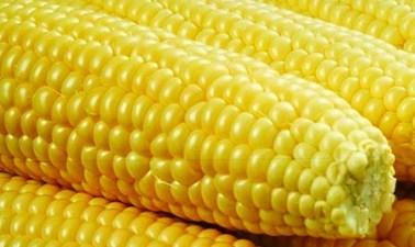 Butter It Up: La Habra Corn Festival