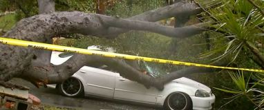 Tree Down in Pasadena Triggered by Rain