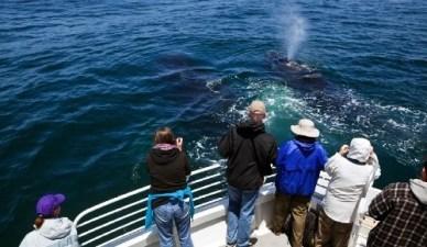 Whale 'Underwater Ballet': Epic Sight