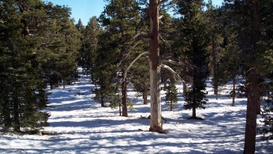 Tram's Snow Contest Wraps