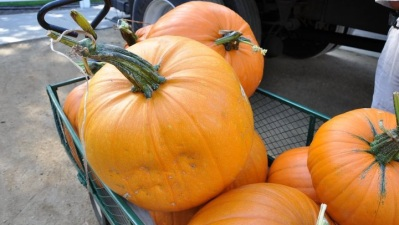 Opening: Irvine Park Railroad Pumpkin Patch
