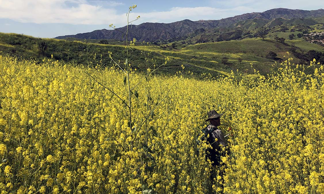 4 to Watch: What to Know About SoCal's Super Bloom Bully