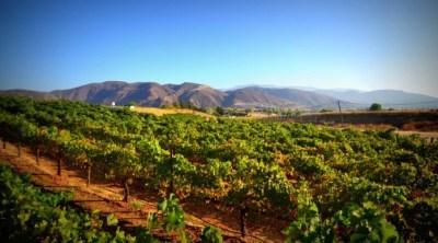 Temecula's World of Wine