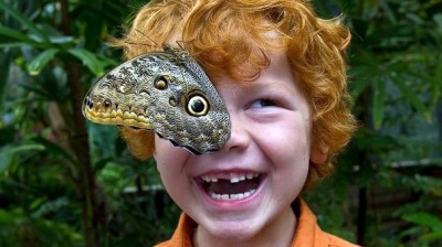Butterfly Jungle Opens