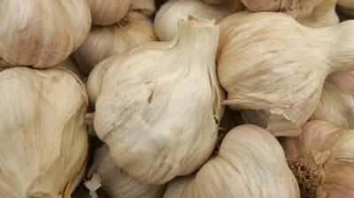 Gilroy, Garlic, and Gardens