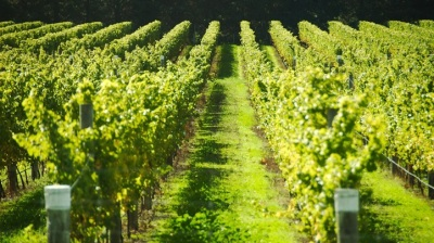 Winding Along the Pacific Coast Wine Trail