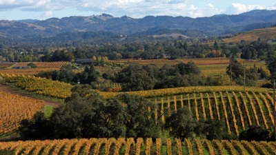 Magical Mystery Tours Along the Wine Road