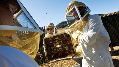 Queen Bees at Carmel Valley