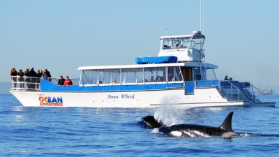 Dana Point Whale Watching: Mother's Day Fun