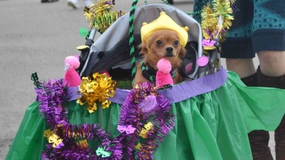 Doggie Gras in Rancho Santa Fe