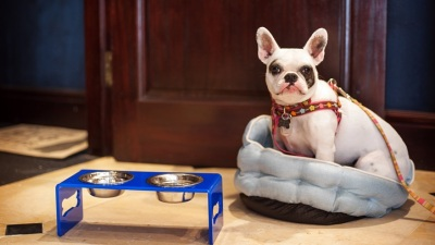 The Empress Hotel: Sleeping Dogs Package