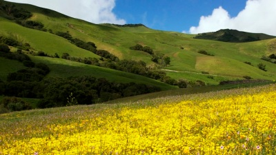 Lovely Lompoc: That Wildflower Moment