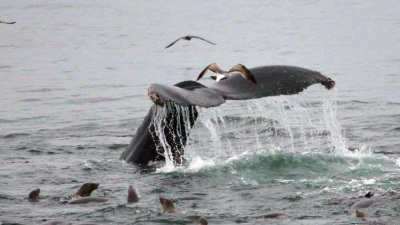 Island Packers: Whale-Awesome Adventures