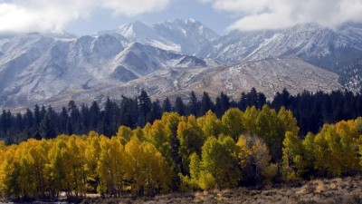 Mammoth's Leaf Peeper Deals