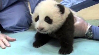 Panda Cub: Vote on Six Names
