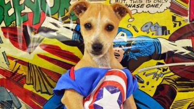 Pawmicon: Superheroic Fundraiser