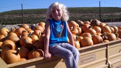 Peltzer Pumpkins Up