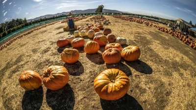 Pumpkin Patch Blooms at Citrus Landmark
