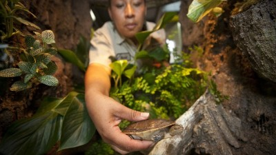 San Diego Zoo's New Reptile Walk