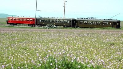 Wildflowers + Rails: Solano County Spring