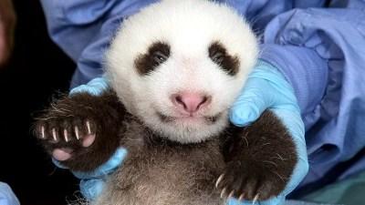 Naming the San Diego Panda