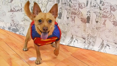 Comic-Con Canines: Adopt a Superhero Dog