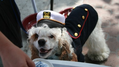 Pet Day on the Bay: Waggers on the Waves