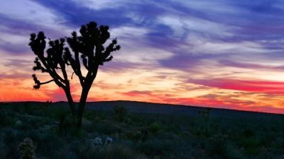 Fee-Free National Park Day: Celebrating Our Public Lands
