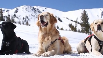 The Avalanche Dogs of Mammoth