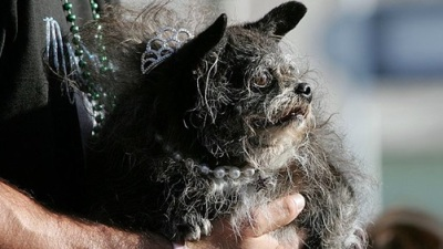 World's Ugliest Dog Contest: Enter Now