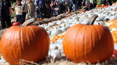 Bugs and Pumpkins and Autumn Fun