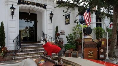 Cypress Inn: Puppy Love Time