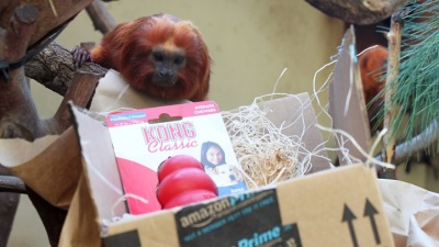 Zoo Animals Open Wishlist Surprises