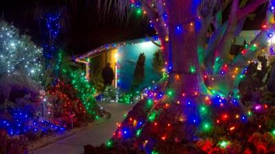 Encinitas Wow: Botanic Garden to Glow