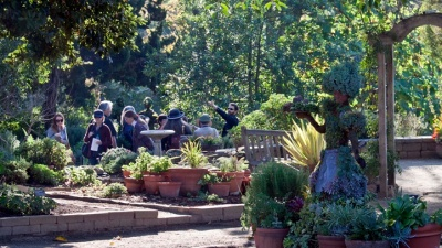 San Diego Botanic Garden: Blue Star Opens