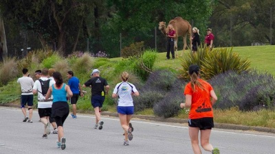 Jogging by Camels: Safari Park Half Marathon