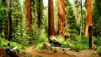 Help the Sequoias While Visiting the Sequoias