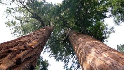 Sunny Sequoias, Warm Wuksachi
