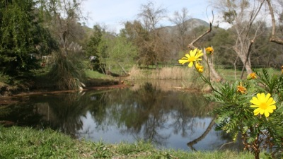 Touring Anjelica Huston's Garden